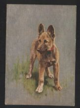 Alsation German shepherd   tobacco cigarette card postcard dogs